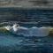 "Winter Wave Break<br />30x40""<br />Oil on Canvas"